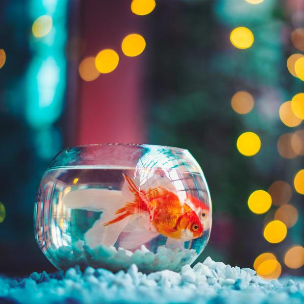 popular-fish-aquarium-owners-should-avoid