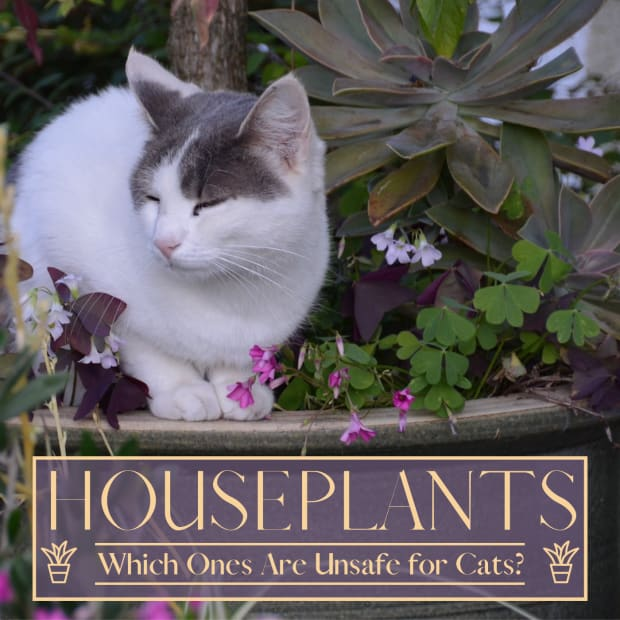 houseplants-poisonous-to-your-cats