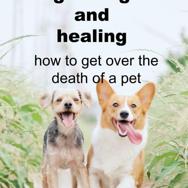 7-ways-to-heal-your-heart-when-your-pet-dies