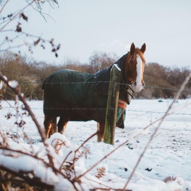 horse-care-in-winter