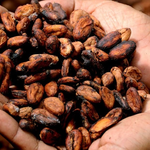 is-raw-cacao-dangerous-how-to-use-this-superfood-safely