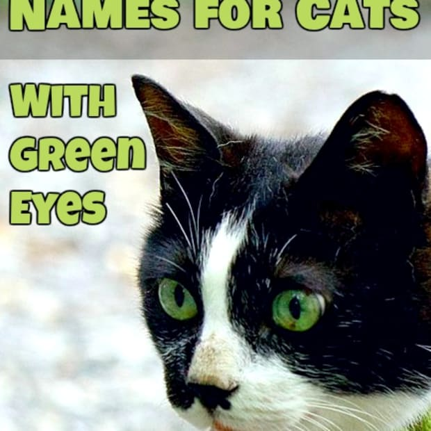 names-for-cats-with-green-eyes
