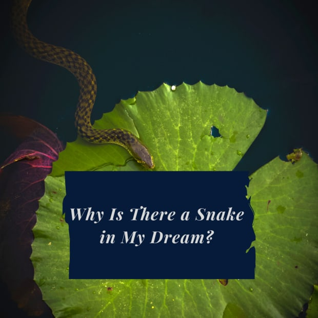 Why Is There a Snake in My Dream_