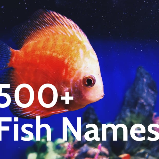 500-creative-fun-and-cool-names-for-your-pet-fish