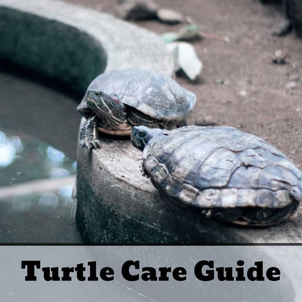 how-to-take-care-of-a-turtle