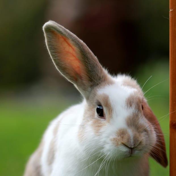 instant-tips-to-improve-your-understanding-of-rabbit-body-language