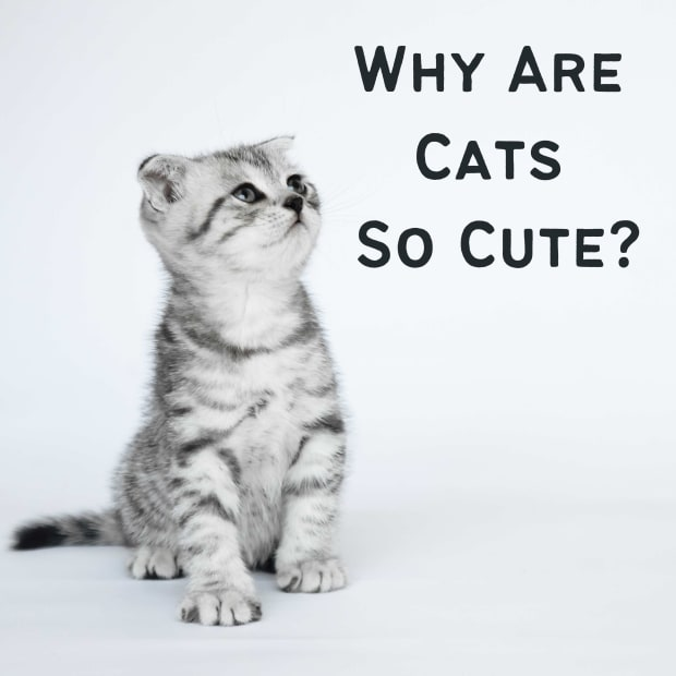 why-are-cats-cute