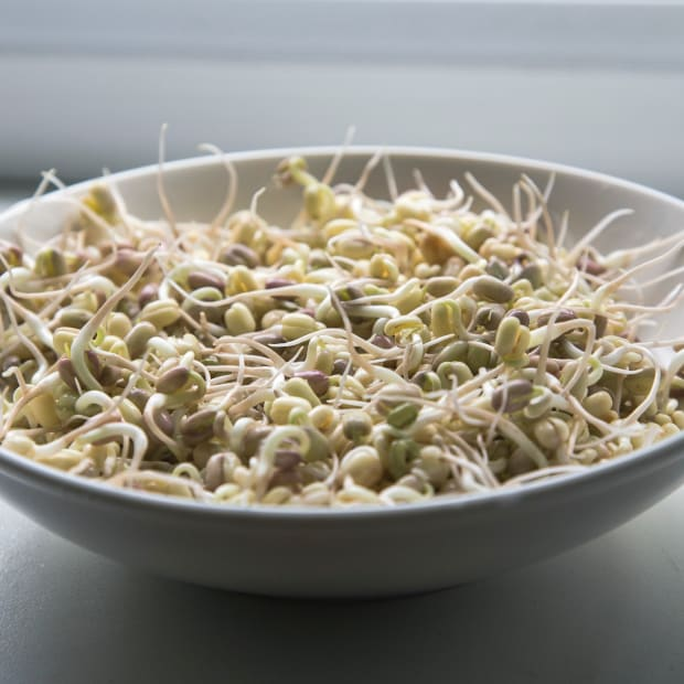 add-some-spring-to-your-meals-with-home-grown-sprouts