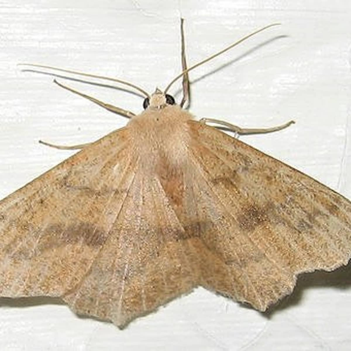 Pantry Moths In Your Kitchen Cupboards