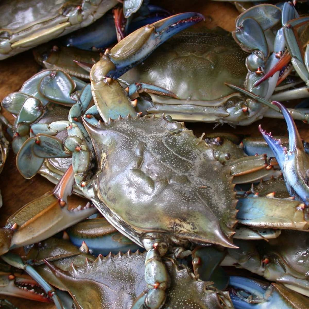 How To Catch Blue Crabs Skyaboveus Outdoors