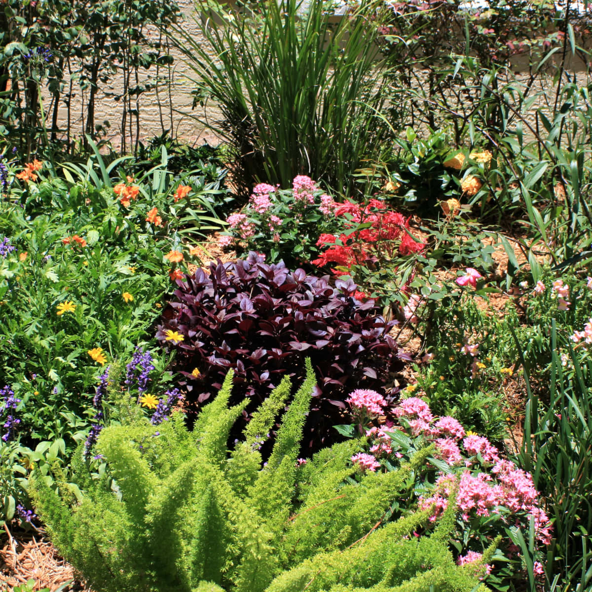 12 Plants That Thrive In The Sun How To Make Your South Florida Flowerbed Beautiful Dengarden Home And Garden