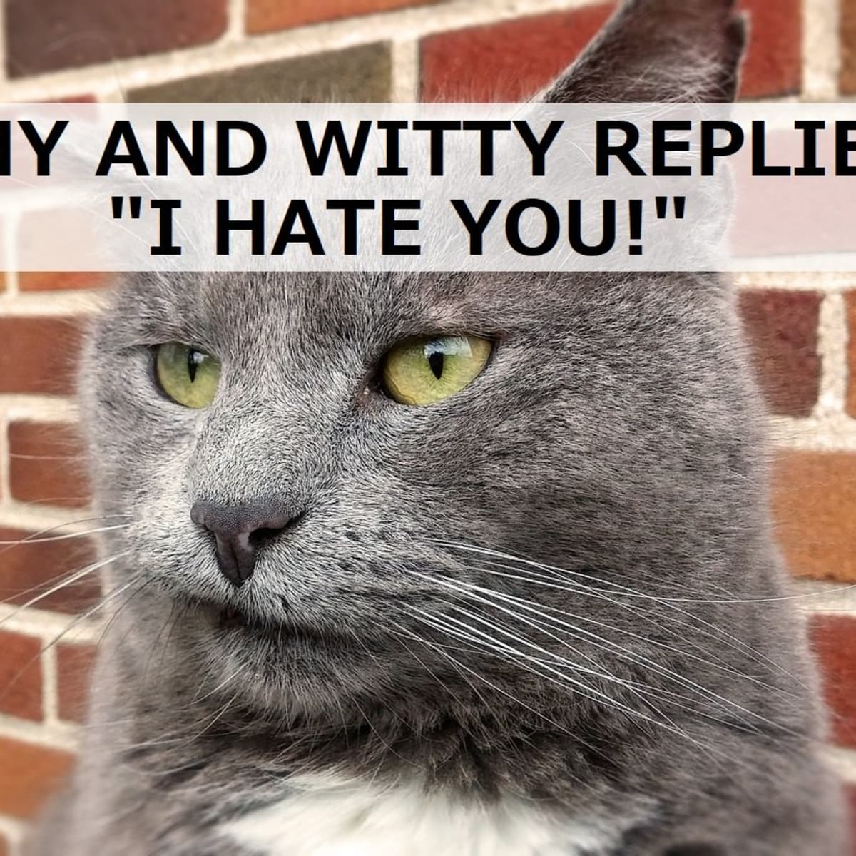 100 Funny And Witty Replies To I Hate You Pairedlife