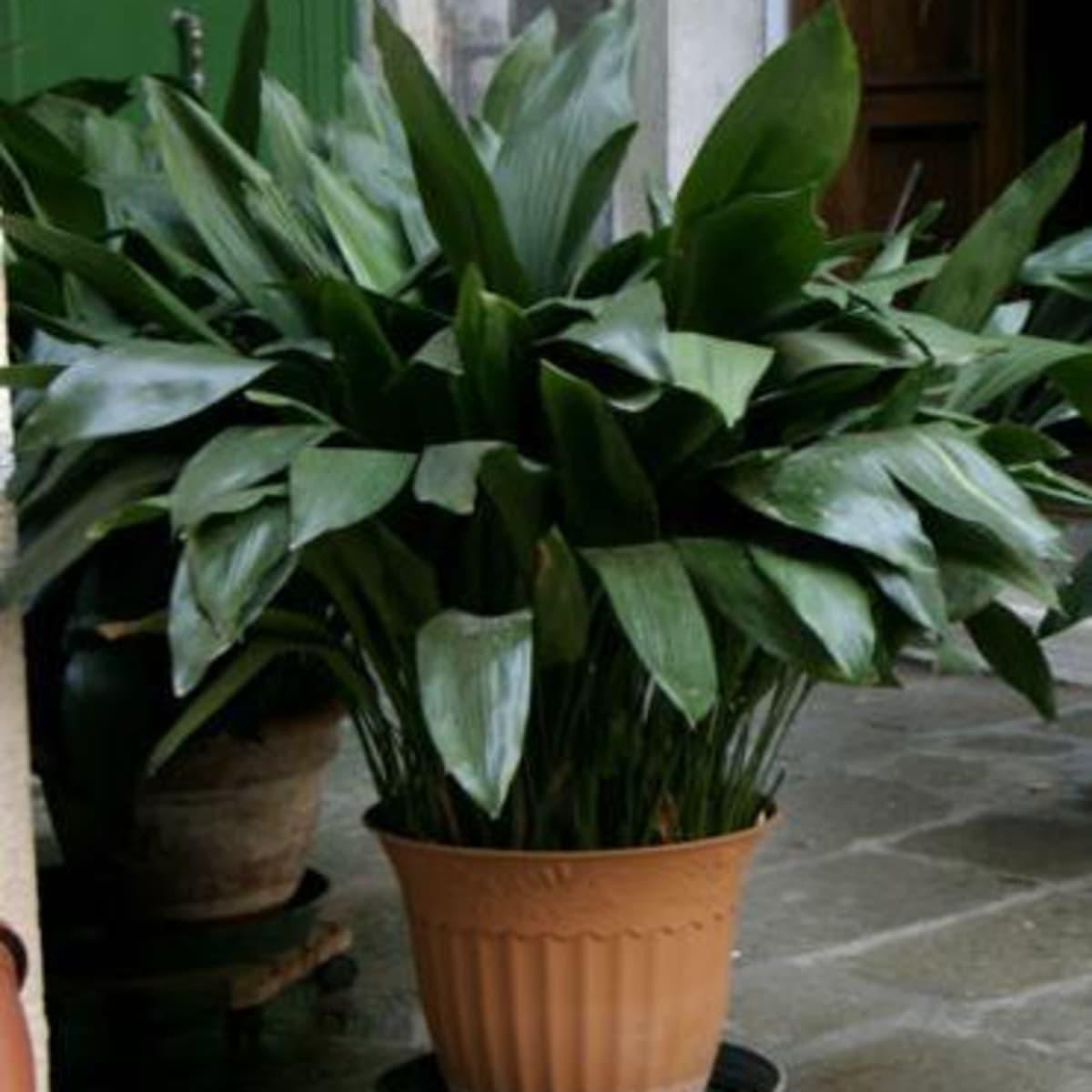 Easiest Indoor Houseplants To Maintain Dengarden Home And Garden