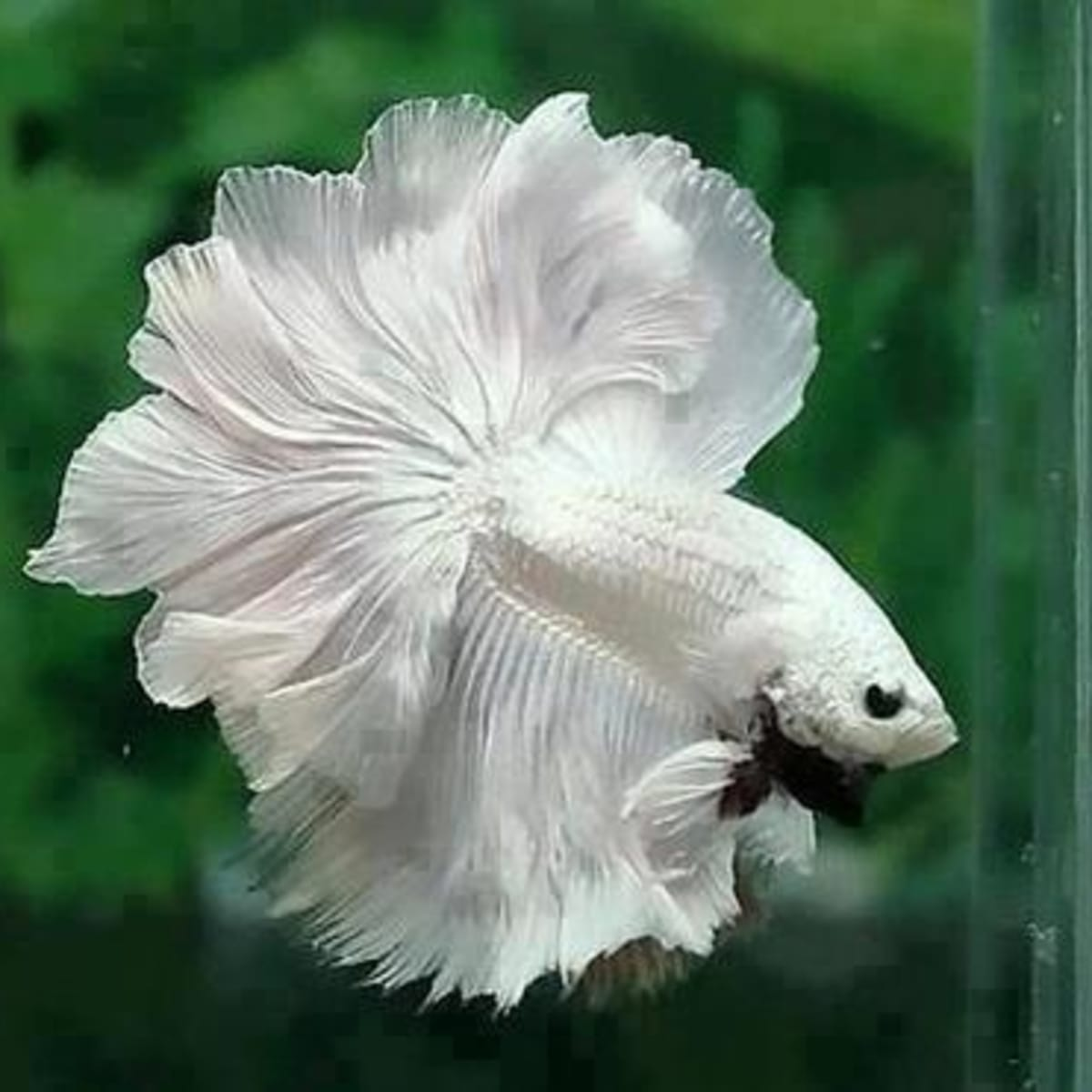 Betta Fish Tank Setup Ideas Pethelpful By Fellow Animal Lovers And Experts