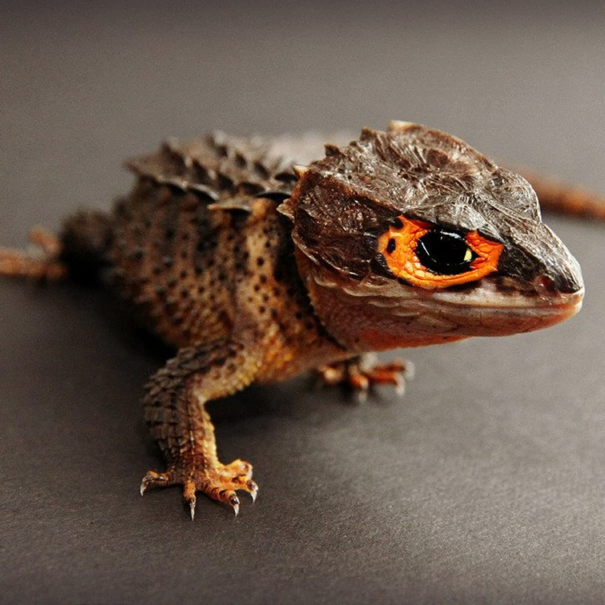 17 Pets You Can Legally Own That Look Like Dragons Pethelpful By Fellow Animal Lovers And Experts