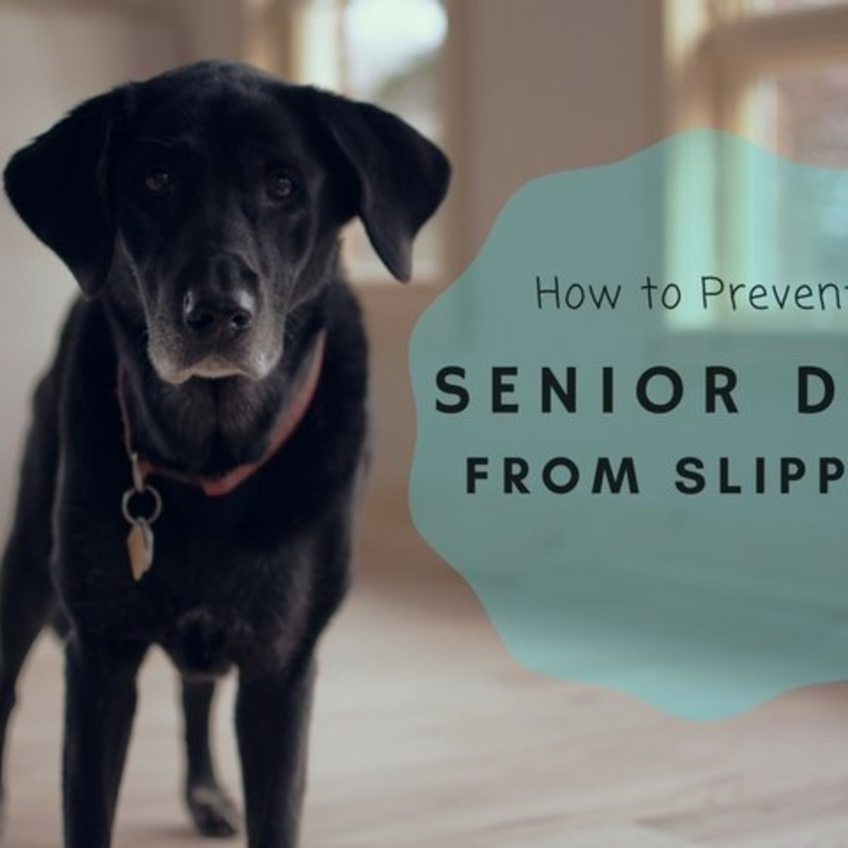 15 Ways To Keep An Old Dog From Slipping On The Floor Pethelpful By Fellow Animal And Experts