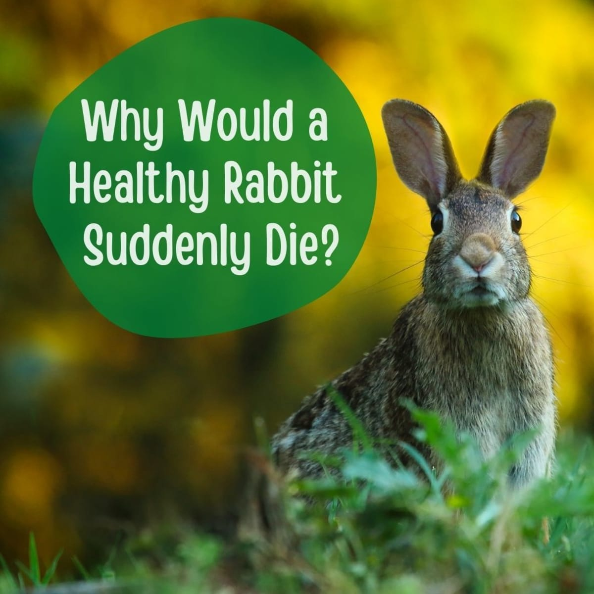 Common Causes Of Sudden Death In Healthy Rabbits Pethelpful By Fellow Animal Lovers And Experts