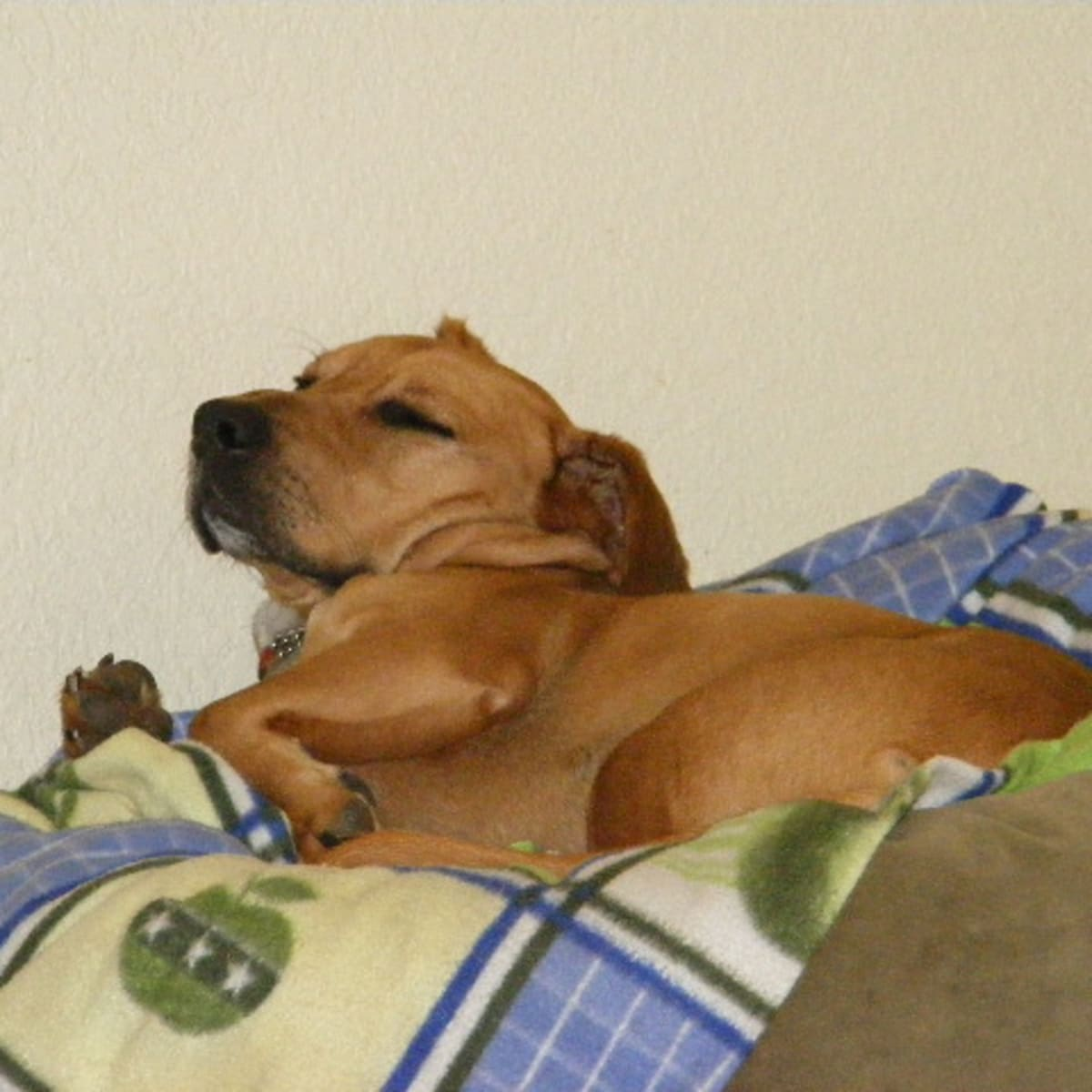 Causes Of Vomiting Blood Hematemesis In Dogs Pethelpful By Fellow Animal Lovers And Experts