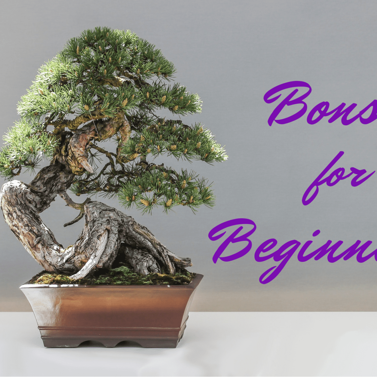 A Beginner S Guide To Bonsai Dengarden Home And Garden