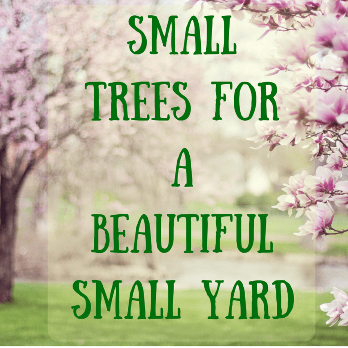 39 Small Trees Under 30 Feet For A Small Yard Or Garden Dengarden Home And Garden