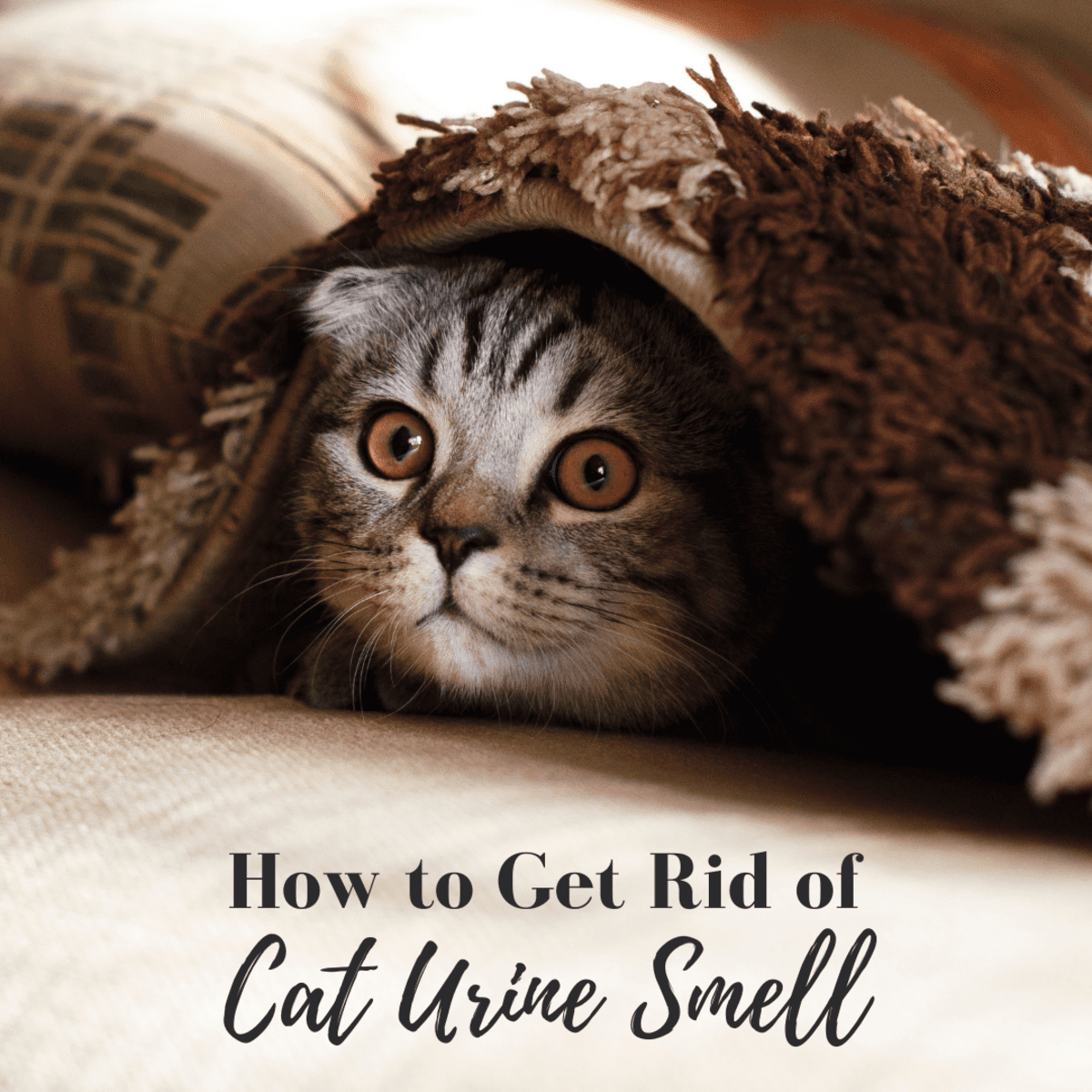 How To Eliminate Cat Urine Smell