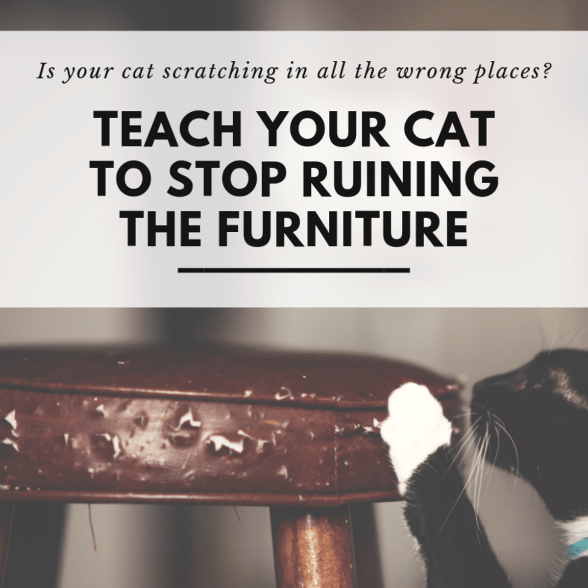 How To Stop Your Cat From Scratching The Furniture Pethelpful By Fellow Animal Lovers And Experts