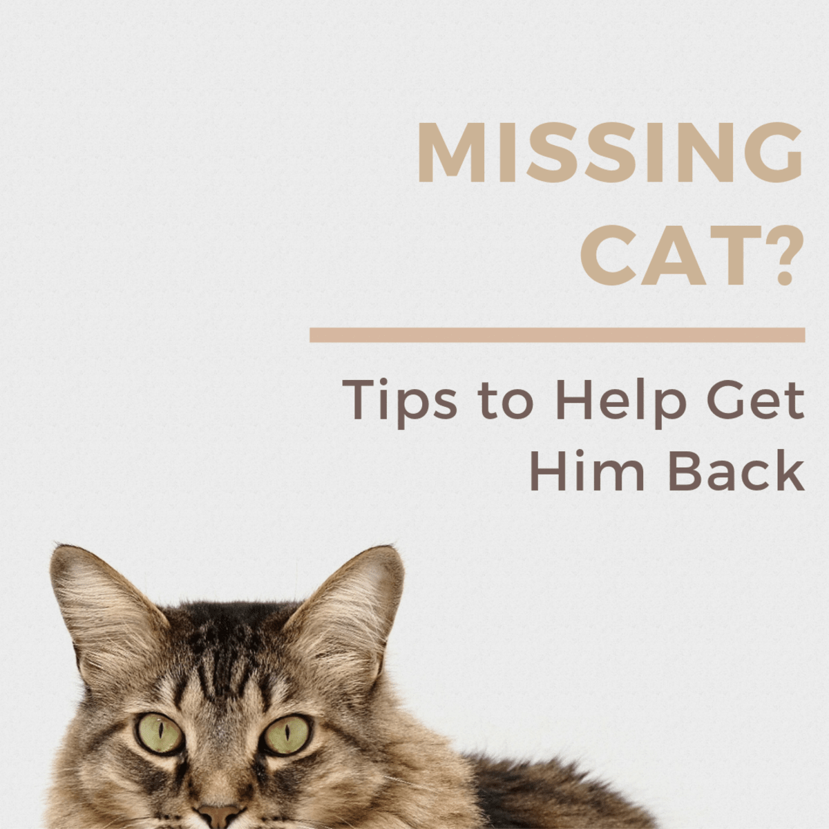 10 Helpful Tips For How To Find A Lost Or Missing Cat Pethelpful