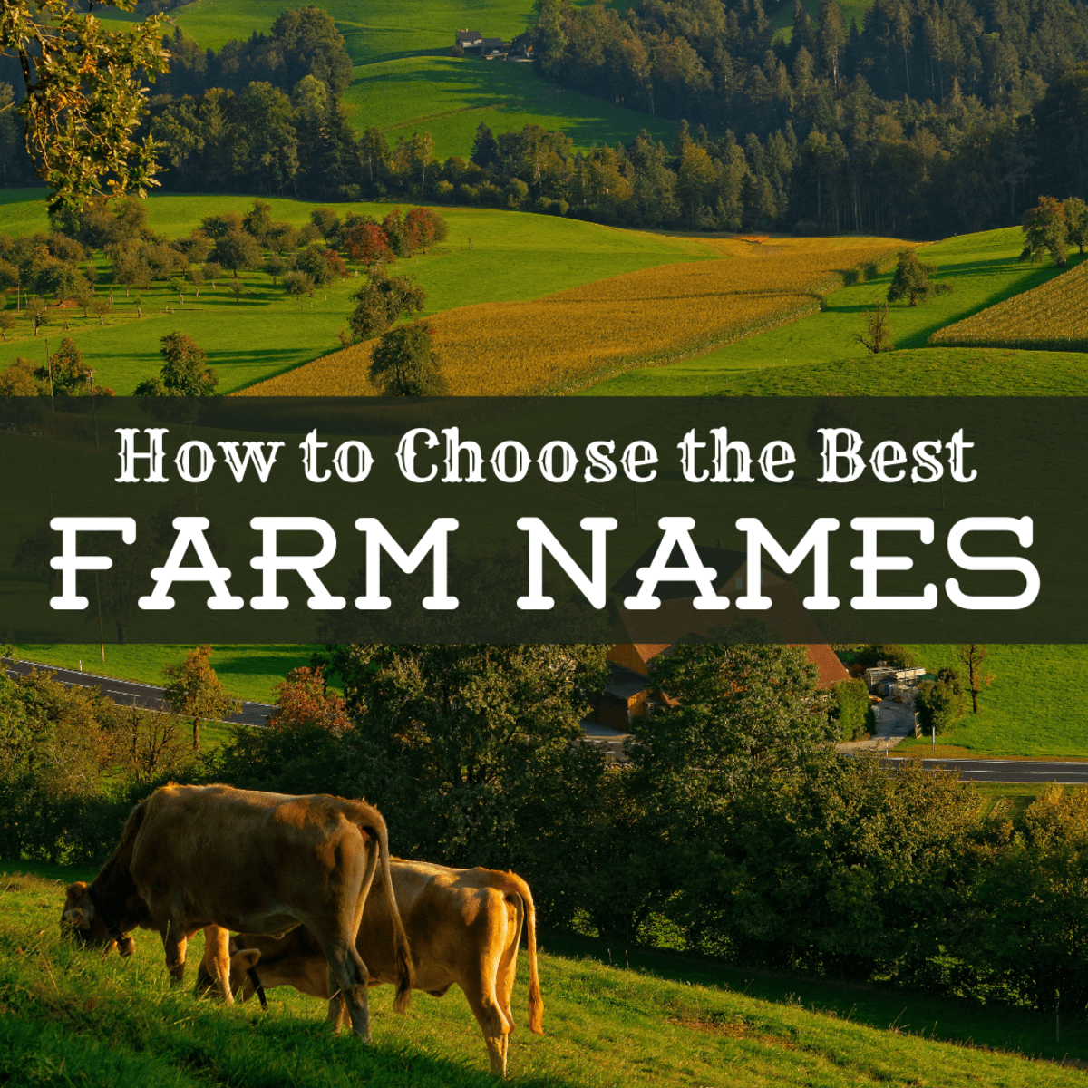 A Guide To Choosing The Best Farm Names Toughnickel Money