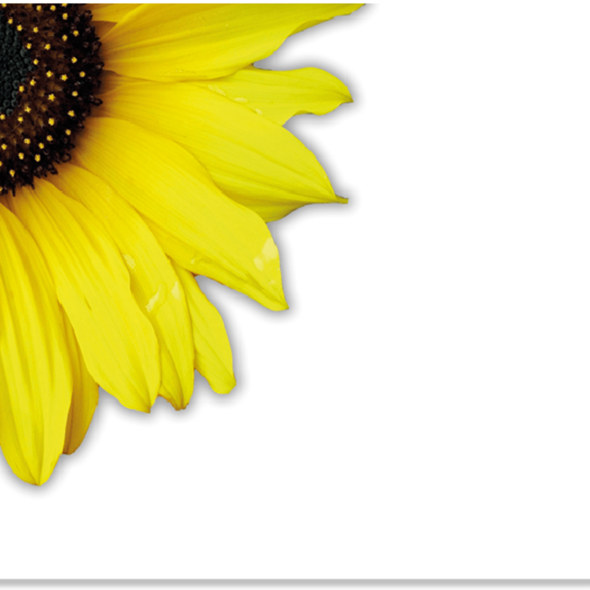Create A Transparent Image Background Using Pixlr Hubpages