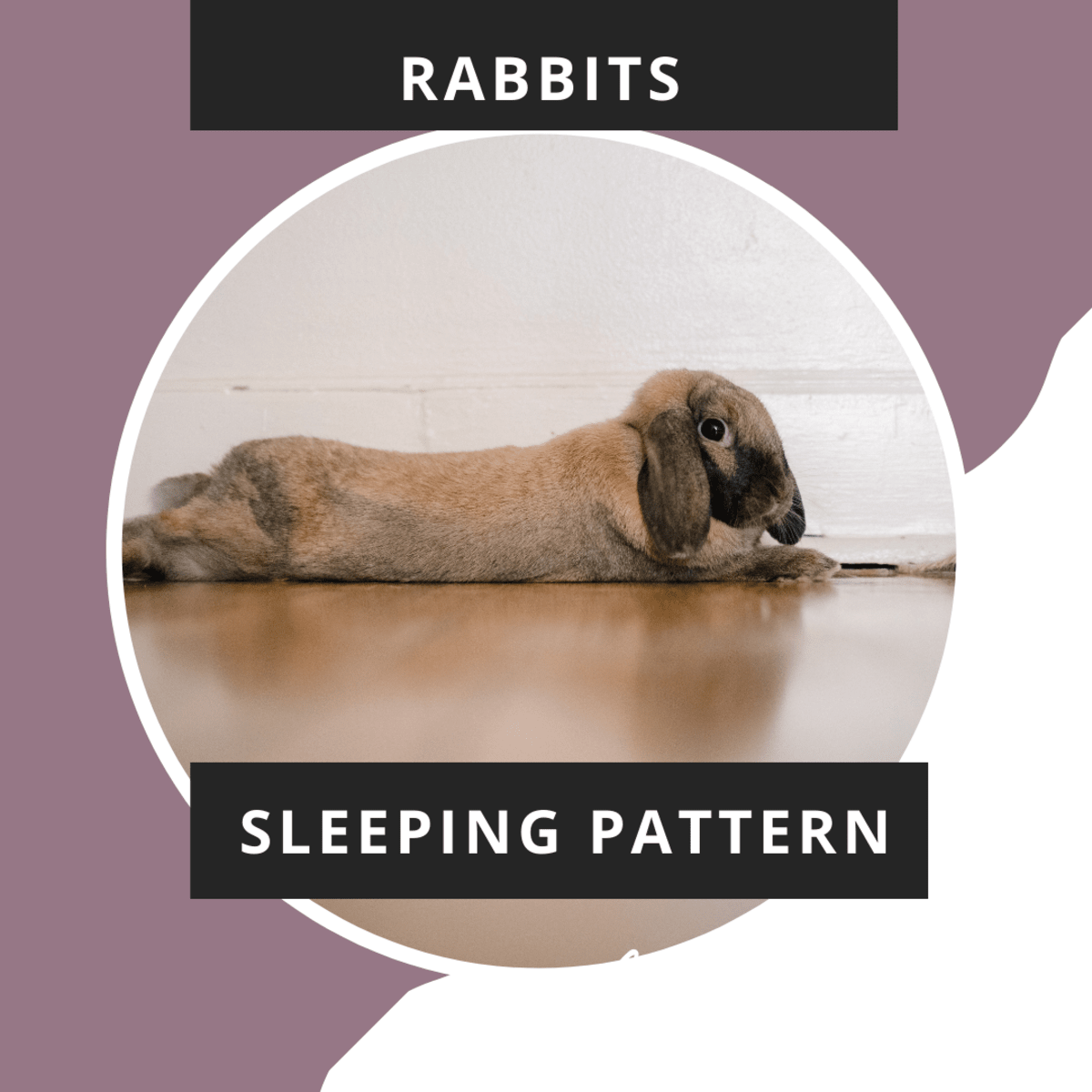 Why Rabbits Grind Their Teeth And Breathe Heavily During Sleep Pethelpful By Fellow Animal Lovers And Experts