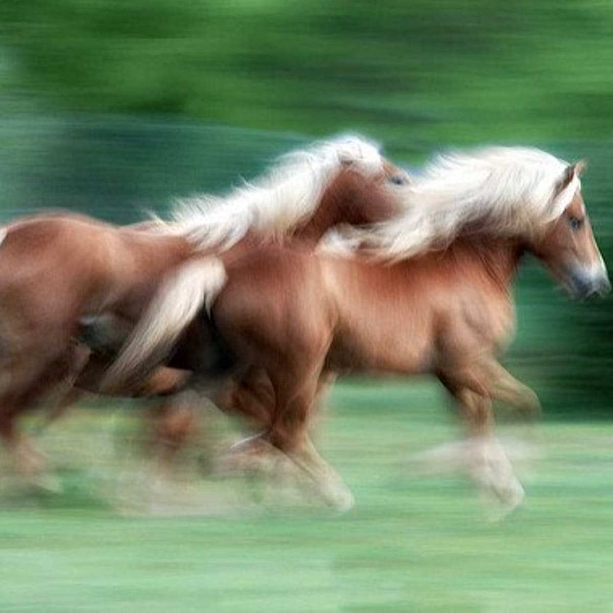Cool Horse Name Ideas Pethelpful By Fellow Animal Lovers And Experts