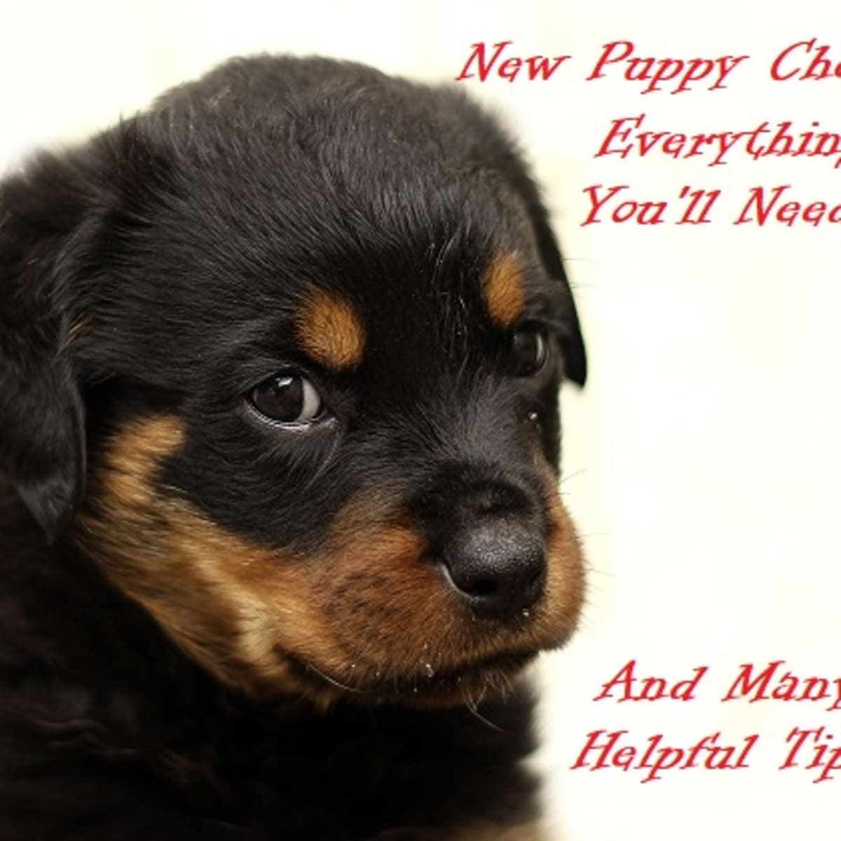 New Puppy Checklist All You Ll Need When Getting A Puppy Pethelpful By Fellow Animal Lovers And Experts