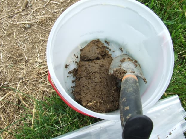 Using a trowel, collect eight or more samples from one area of your landscape. Then mix them together in a clean plastic bucket.