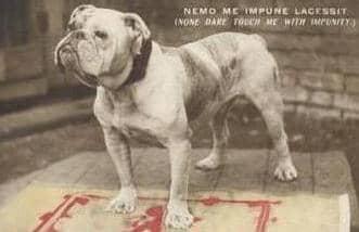 Bulldog circa 1900s
