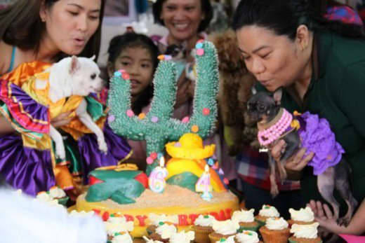 Celebrations can be fun for birthday dogs and their human companions.