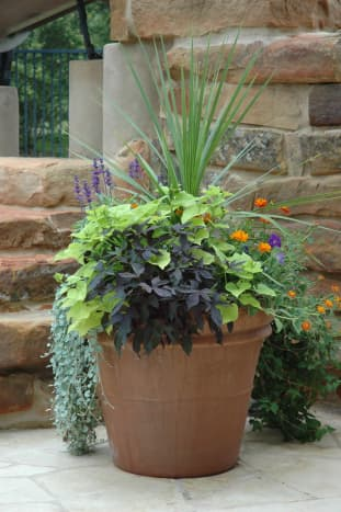 Combine upright and draping plants for a dynamic look.
