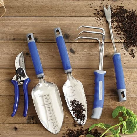 how-to-propagate-lilac-bush