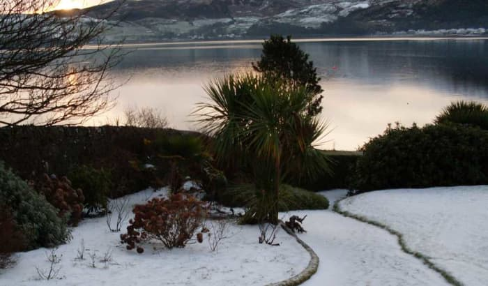 A cabbage palm in the centre of this snowy coastal landscape.