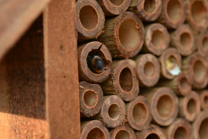 Encourage carpenter bees to nest in your yard by installing (or building) a carpenter bee house.