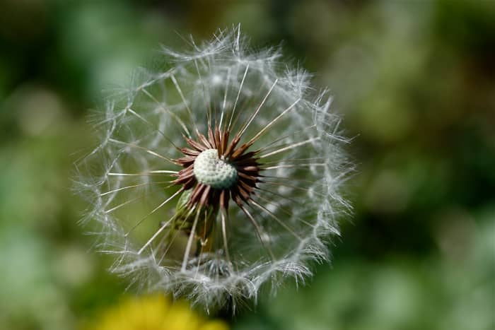 Allergies may be caused by factors such as dust mites; pollen from trees, plants, grasses, and weeds; animal dander; molds; contact lenses and lens solution; and cosmetics.
