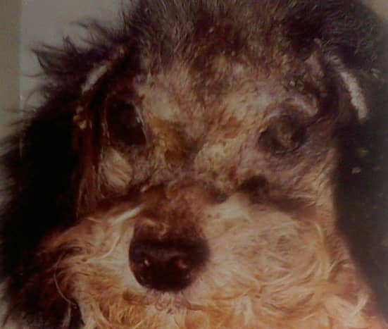 Misery for the dog and cat and a true health hazard that can result in the animal's death.
