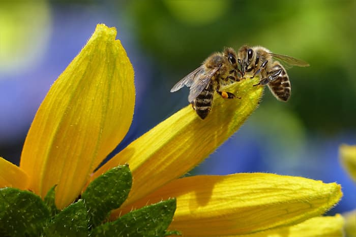 Honey bees talking to each other.
