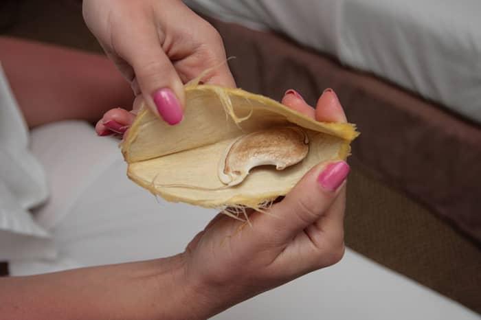 Opened seed of yellow mango
