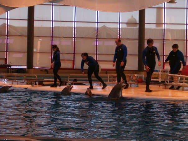 Baltimore Aquarium dolphin show