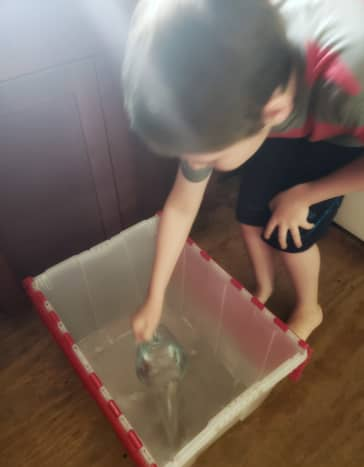 Pour 5 cups of water into a large plastic container. A large tote works perfectly!
