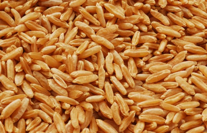 Khorasan wheat, sold under the KAMUT brand name.