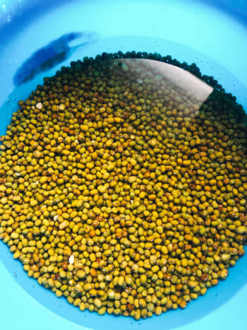 In a medium bowl, soak the mung beans for 1 hour.