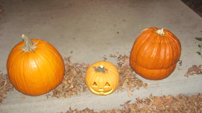 The kids picked out their favorite pumpkin at the pumpkin stand