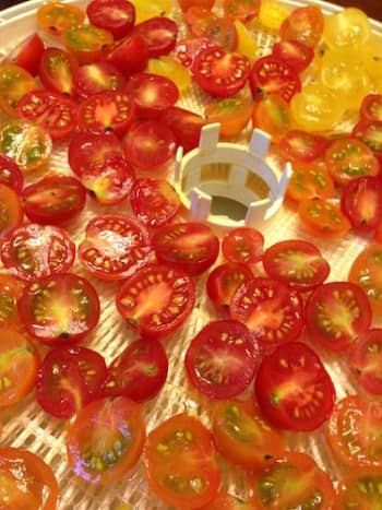 Sweet as candy tomatoes: Once dehydrated, store tomatoes whole or as powder. Perfect to thicken, or flavor liquids.