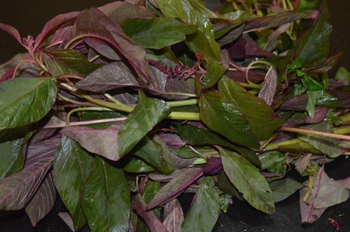 Red amaranth leaves